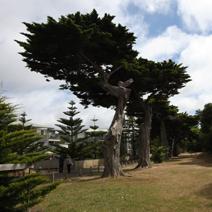 Zdj. nr 5;Zdjęcie wykonano w Australii.