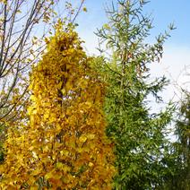 Zdj. nr 3;Barwa jesienna