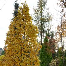 Zdj. nr 4;Barwa jesienna