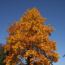 Zdj. nr 5;Barwa jesienna.