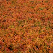 Zdj. nr 5;Barwa jesienna
