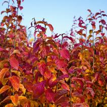 Zdj. nr 1;Barwa jesienna