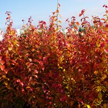 Zdj. nr 2;Barwa jesienna