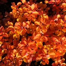Zdj. nr 4;Barwa jesienna.