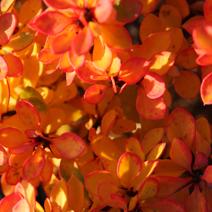 Zdj. nr 6;Barwa jesienna.