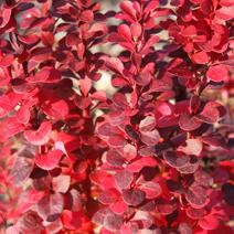 Zdj. nr 2;Barwa jesienna.
