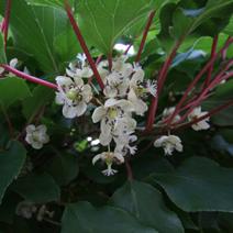 Zdj. nr 2;Kwiaty żeńskie