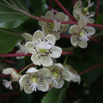 Zdj. nr 3;Kwiaty żeńskie
