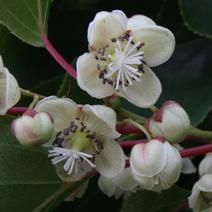 Zdj. nr 4;Kwiaty żeńskie