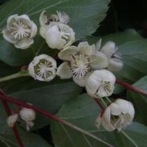 Zdj. nr 5;Kwiaty żeńskie