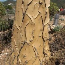 Zdj. nr 2;Zdjęcie wykonane w RPA.