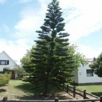 Zdj. nr 1;Zdjęcie wykonane w RPA.