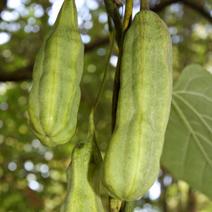 Zdj. nr 8;Owoce