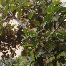 Zdj. nr 1;Zdjęcie wykonane na Dominikanie.