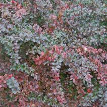 Zdj. nr 6;Barwa późną jesienią.