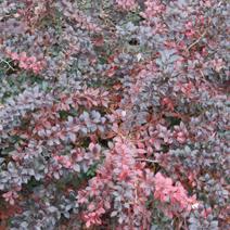Zdj. nr 5;Barwa późną jesienią.
