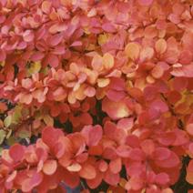 Barwa jesienna