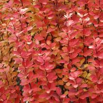 Barwa jesienna.