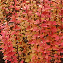 Zdj. nr 11;Barwa jesienna