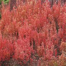 Zdj. nr 12;Barwa jesienna