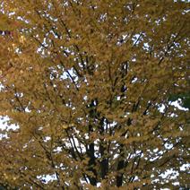 Zdj. nr 8;Barwa jesienna