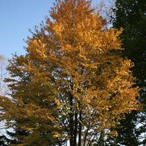 Zdj. nr 10;Barwa jesienna