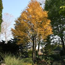 Zdj. nr 9;Barwa jesienna