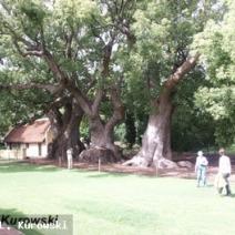 Zdj. nr 4;Zdjęcie wykonane w RPA.