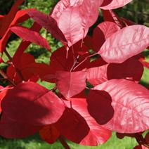 Zdj. nr 3;Barwa jesienna.