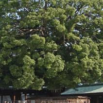Zdjęcie wykonane w Japonii.