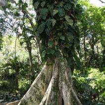 Zdj. nr 2;Zdjęcie wykonane w Brazylii.