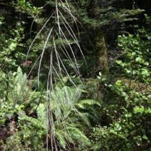 Zdj. nr 3;Zdjęcie wykonane w Nowej Zelandii.