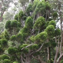 Zdj. nr 1;Zdjęcie wykonane w Nowej Zelandii.