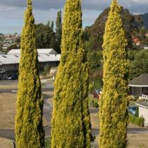 Zdj. nr 5;Zdjęcie wykonane w Nowej Zelandii.
