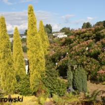 Zdj. nr 7;Zdjęcie wykonane w Nowej Zelandii.