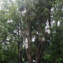 Zdj. nr 3;Zdjecie wykonane w Nowej Zelandii.