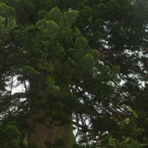 Zdj. nr 4;Zdjęcie wykonane w Nowej Zelandii.