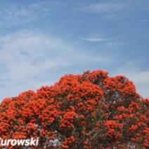 Zdjęcie wykonane w Nowej Zelandii.