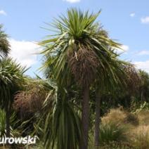 Zdj. nr 2;Zdjecie wykonane w Nowej Zelandii.