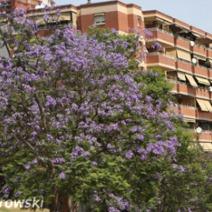 Zdj. nr 5;Zdjęcie wykonane w Hiszpanii