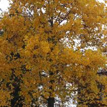 Zdj. nr 6;Barwa jesienna