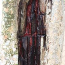 Zdj. nr 1;Zdjęcie wykonane w Brzaylii.