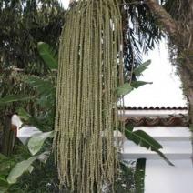 Zdj. nr 1;Zdjęcie wykonane w Brazylii.