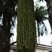 Zdj. nr 3;Zdjęcie wykonane w Brazylii.