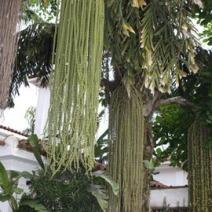 Zdj. nr 6;Zdjęcie wykonane w Brazylii.