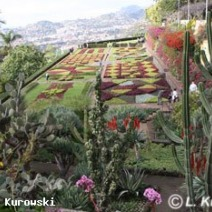 Zdj. nr 1;Zdjęcie wykonane na Maderze.
