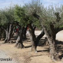 Zdj. nr 4;Zdjęcie wykonane w Hiszpanii