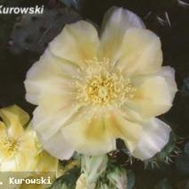 Zdj. nr 3;Zdjęcie wykonane w Polsce - w Końskowoli
