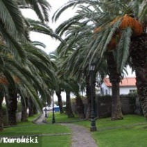 Zdj. nr 2;Zdjęcie wykonane na Maderze.