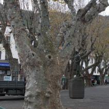 Zdjęcie wykonane na Maderze.